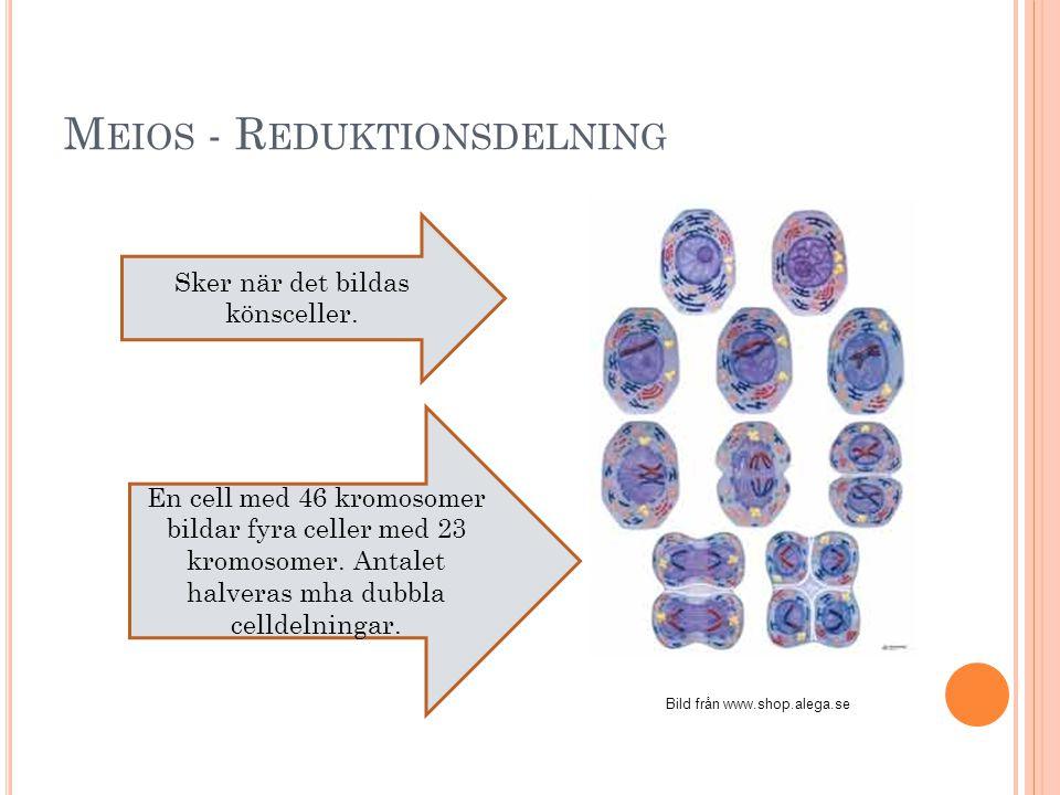 Meios - Reduktionsdelning