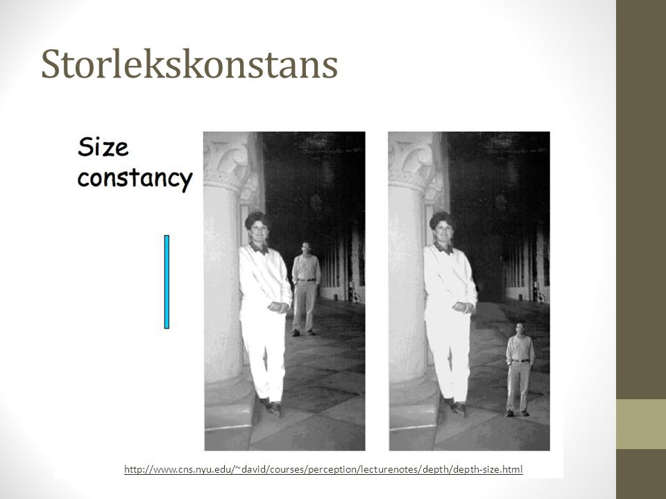 Storlekskonstans http://www.cns.nyu.edu/~david/courses/perception/lecturenotes/depth/depth-size.html.