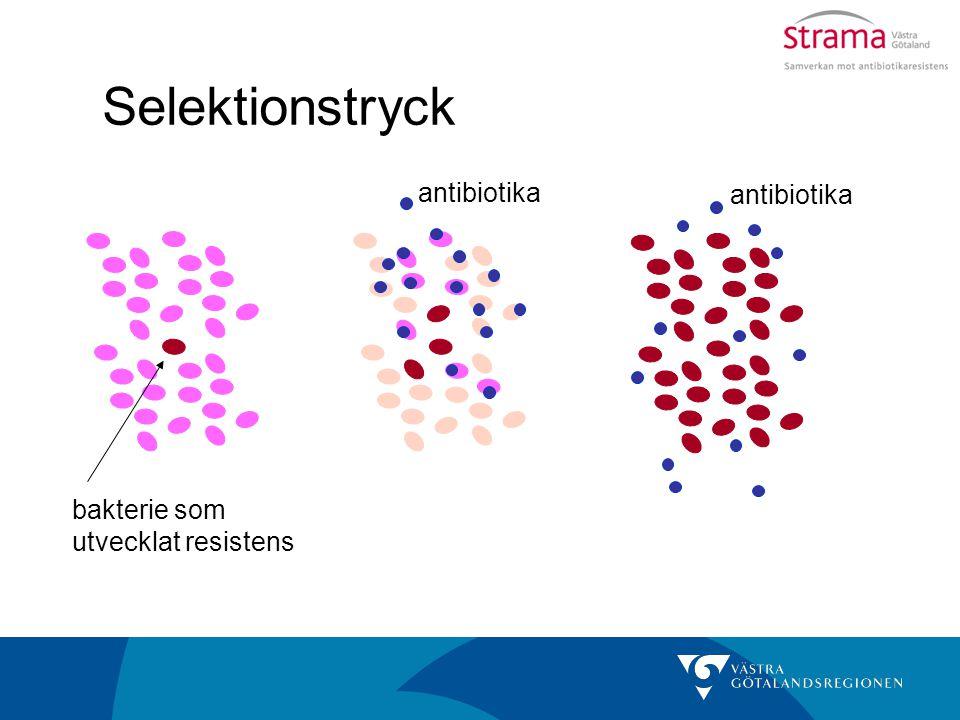 Selektionstryck antibiotika antibiotika