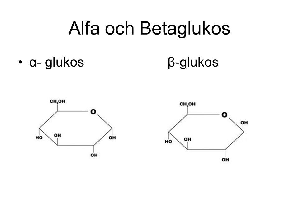Alfa och Betaglukos α- glukos β-glukos