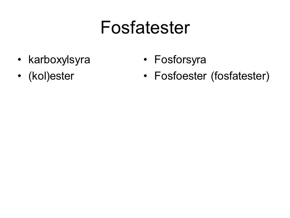 Fosfatester karboxylsyra (kol)ester Fosforsyra