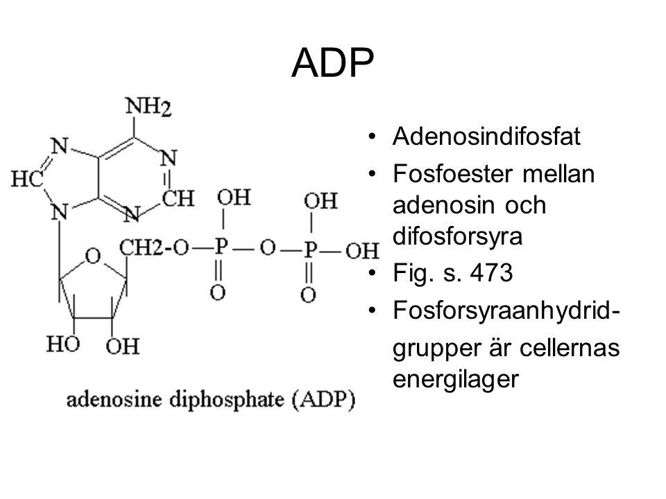 ADP Adenosindifosfat Fosfoester mellan adenosin och difosforsyra
