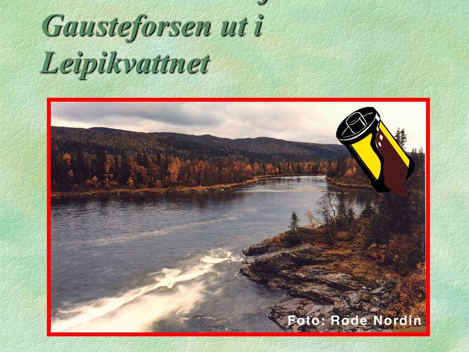 Med våldsam kraft rusar Gausteforsen ut i Leipikvattnet