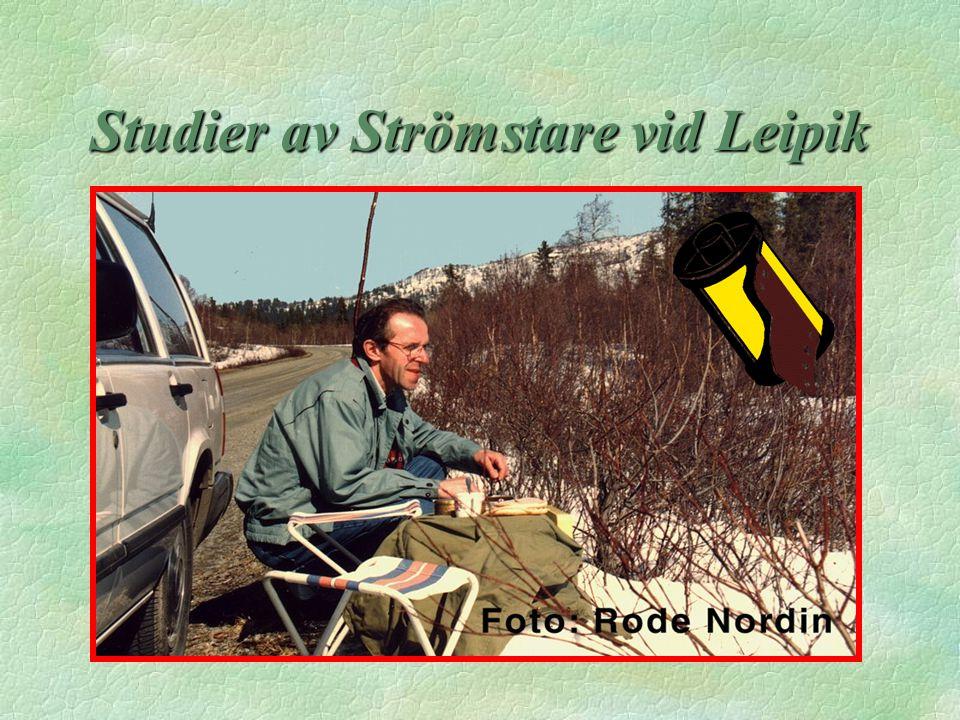 Studier av Strömstare vid Leipik