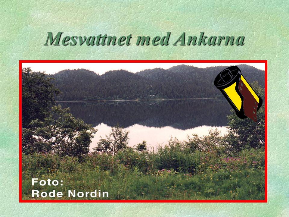 Mesvattnet med Ankarna