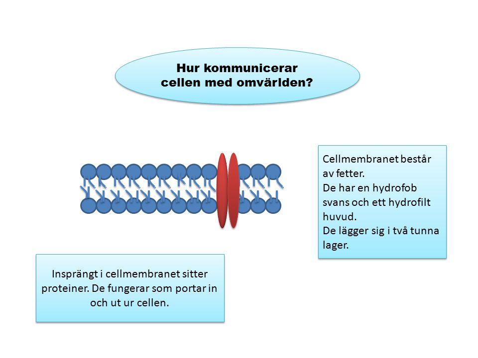 Hur kommunicerar cellen med omvärlden