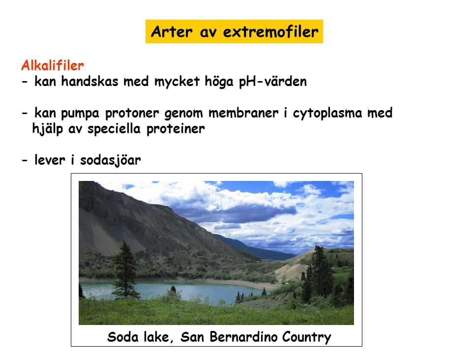 Arter av extremofiler Alkalifiler
