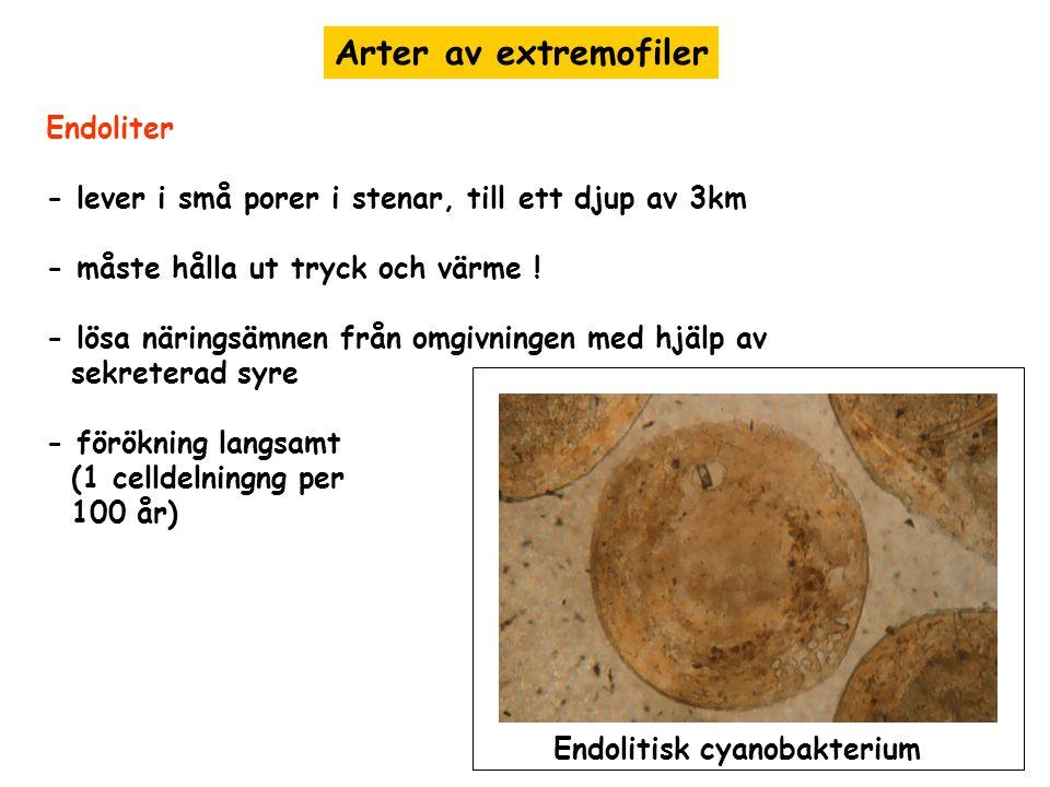 Arter av extremofiler Endoliter