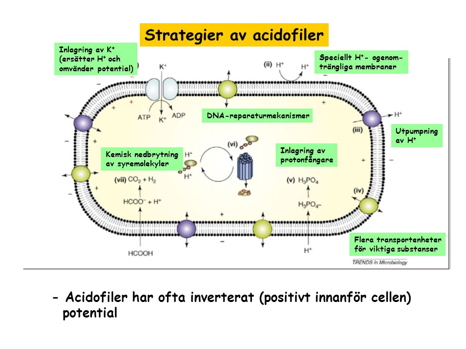 Strategier av acidofiler
