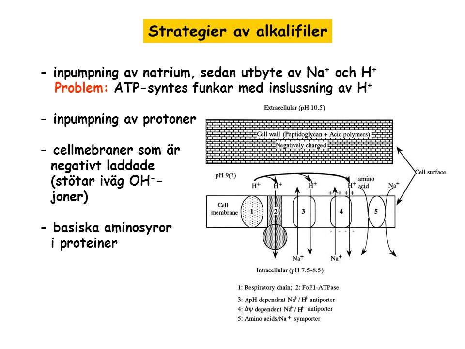 Strategier av alkalifiler