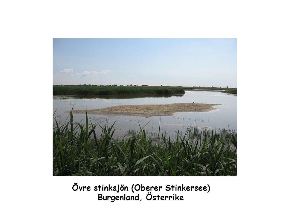 Övre stinksjön (Oberer Stinkersee)