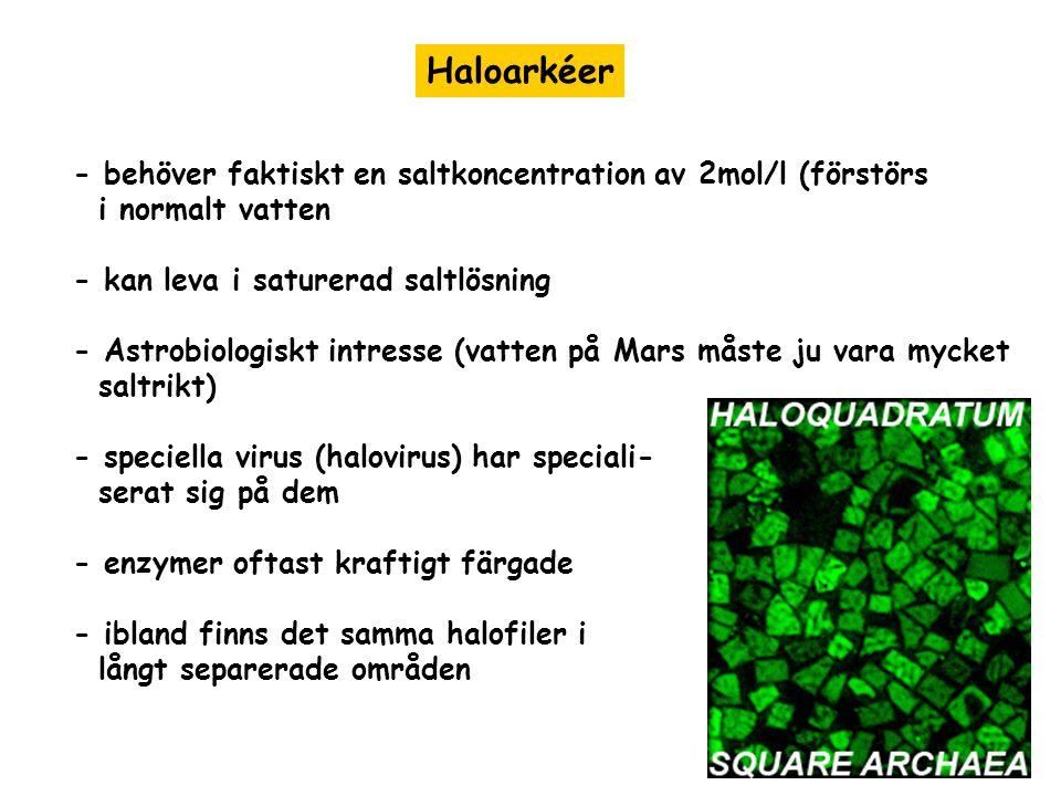 Haloarkéer - behöver faktiskt en saltkoncentration av 2mol/l (förstörs