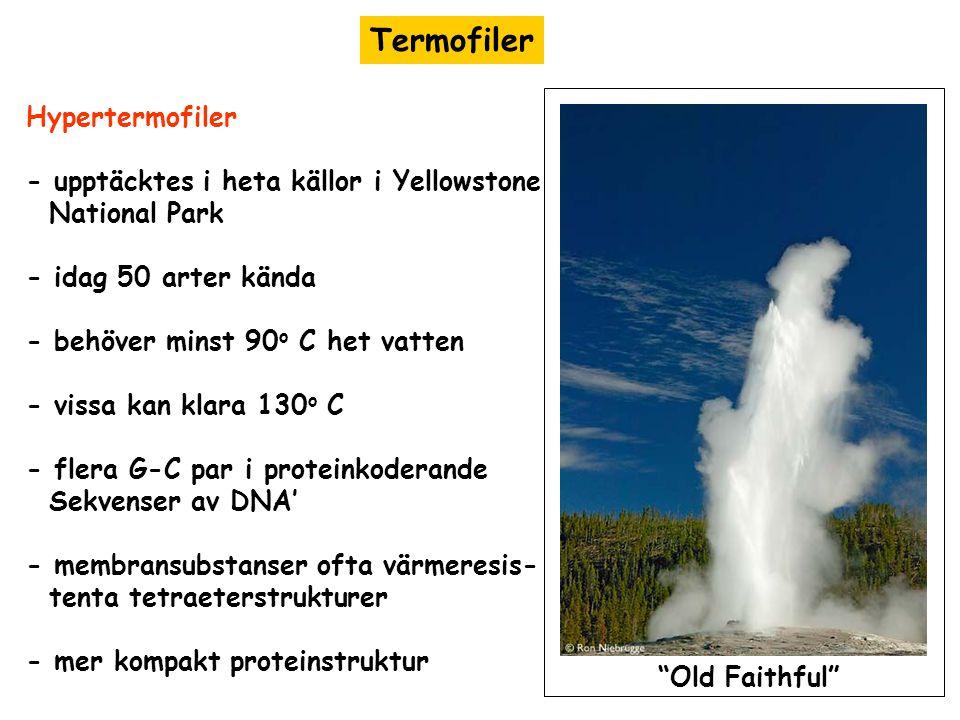 Termofiler Hypertermofiler - upptäcktes i heta källor i Yellowstone