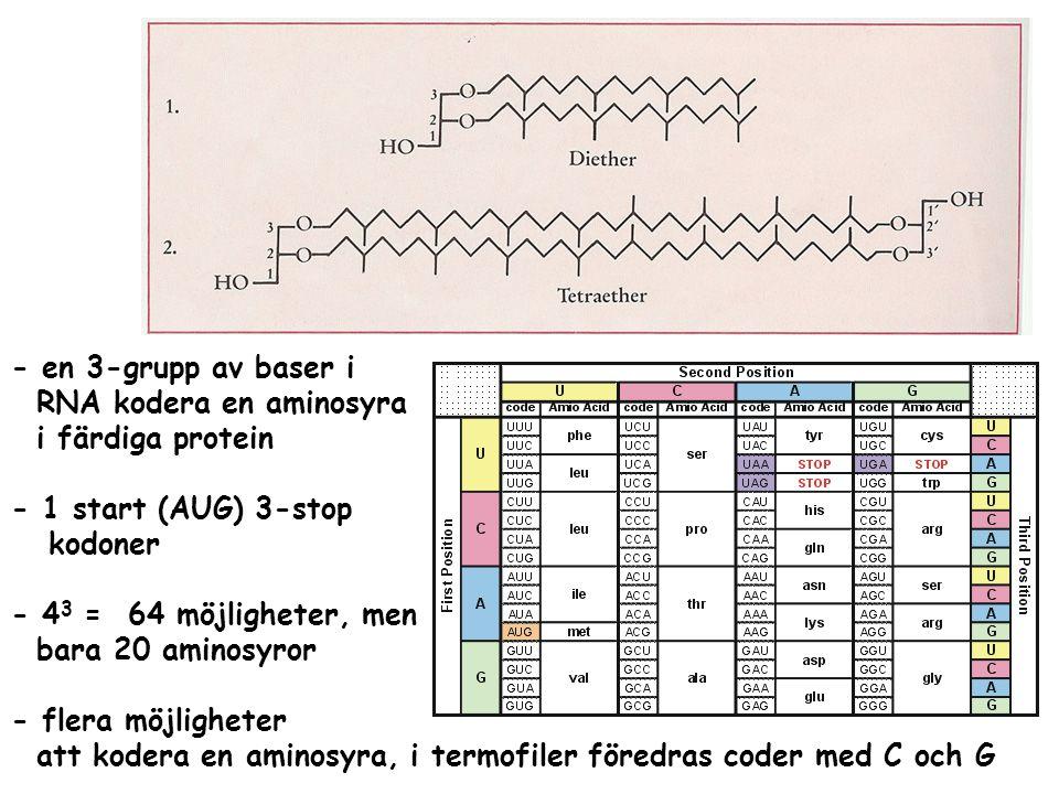 - en 3-grupp av baser i RNA kodera en aminosyra. i färdiga protein. - 1 start (AUG) 3-stop. kodoner.