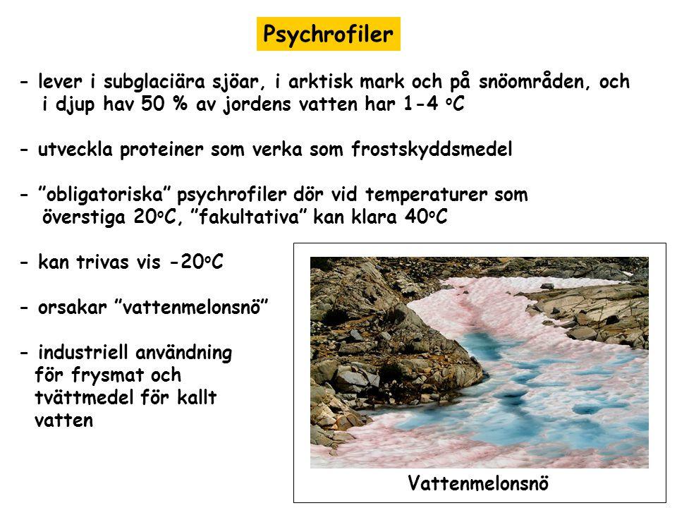 Psychrofiler - lever i subglaciära sjöar, i arktisk mark och på snöområden, och. i djup hav 50 % av jordens vatten har 1-4 oC.
