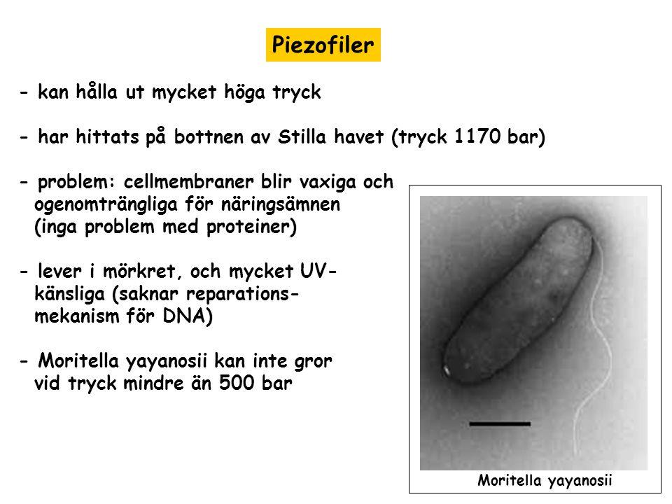 Piezofiler - kan hålla ut mycket höga tryck
