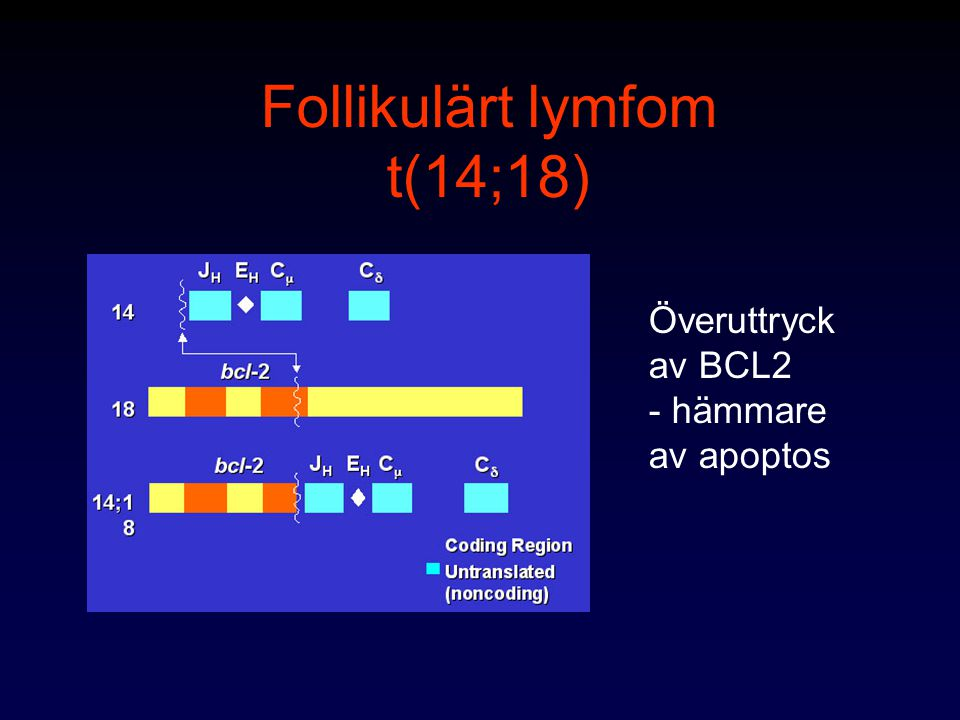 Follikulärt lymfom t(14;18)