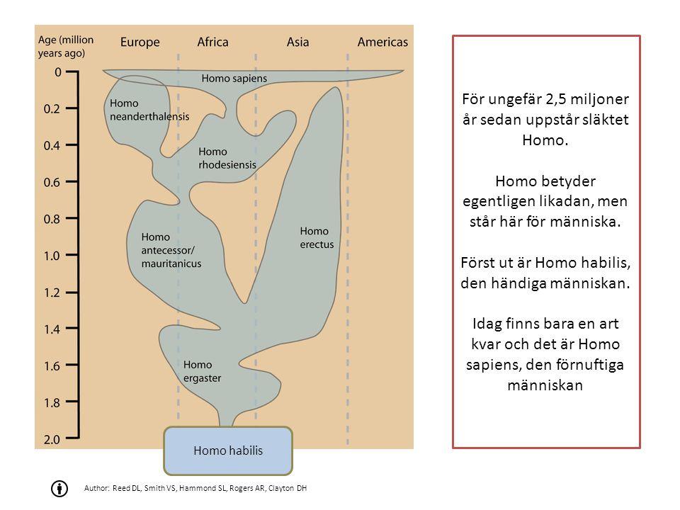 För ungefär 2,5 miljoner år sedan uppstår släktet Homo.