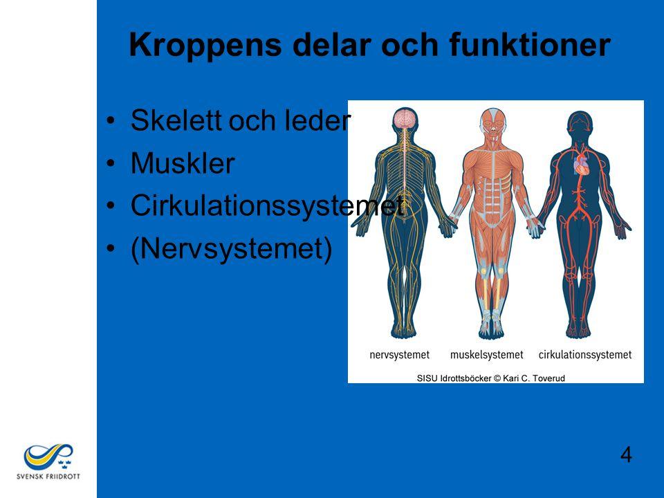 Kroppens delar och funktioner
