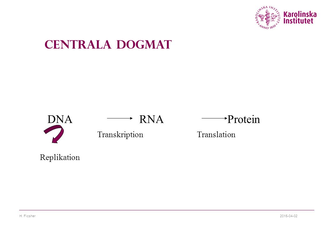 Centrala Dogmat DNA RNA Protein Transkription Translation Replikation