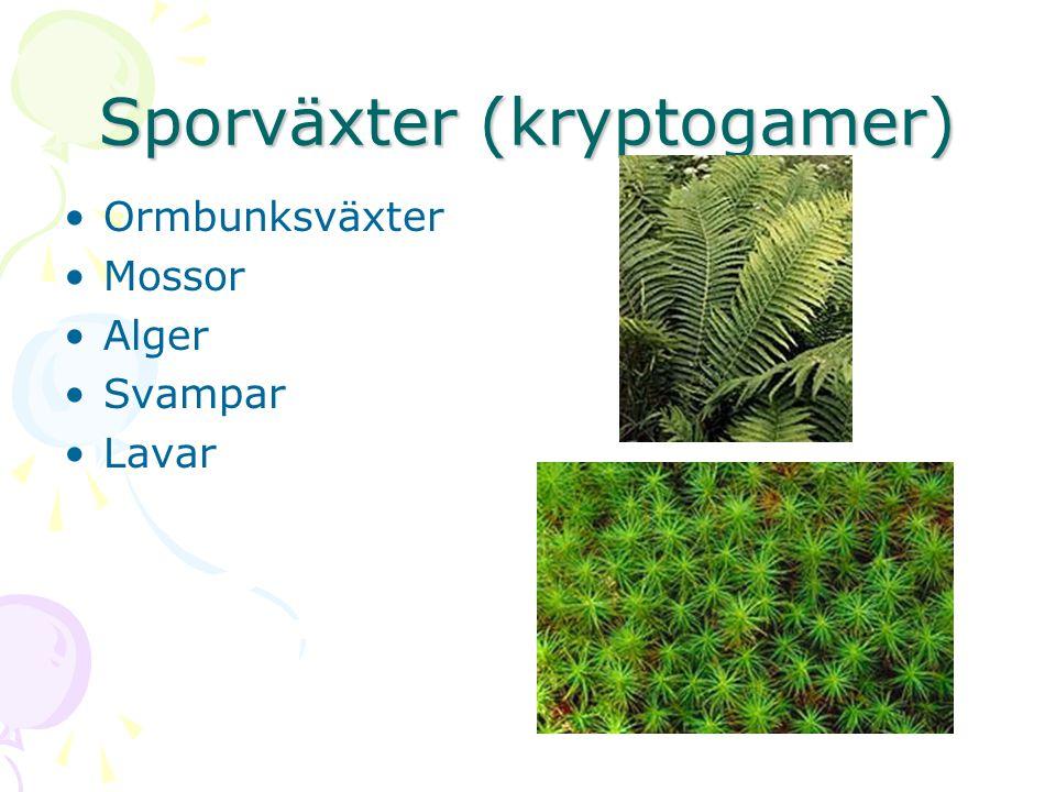 Sporväxter (kryptogamer)
