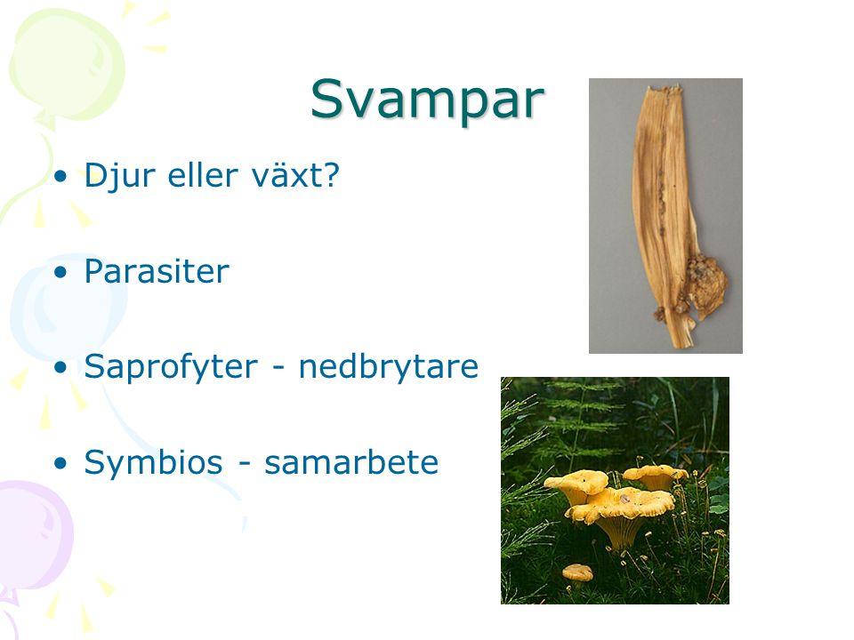 Svampar Djur eller växt Parasiter Saprofyter - nedbrytare