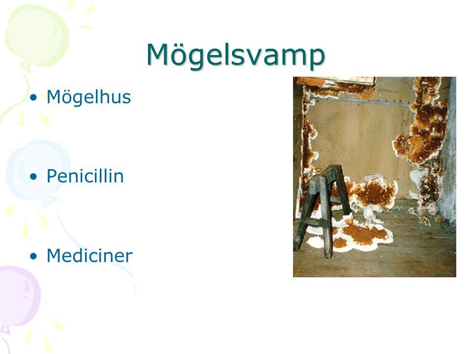Mögelsvamp Mögelhus Penicillin Mediciner