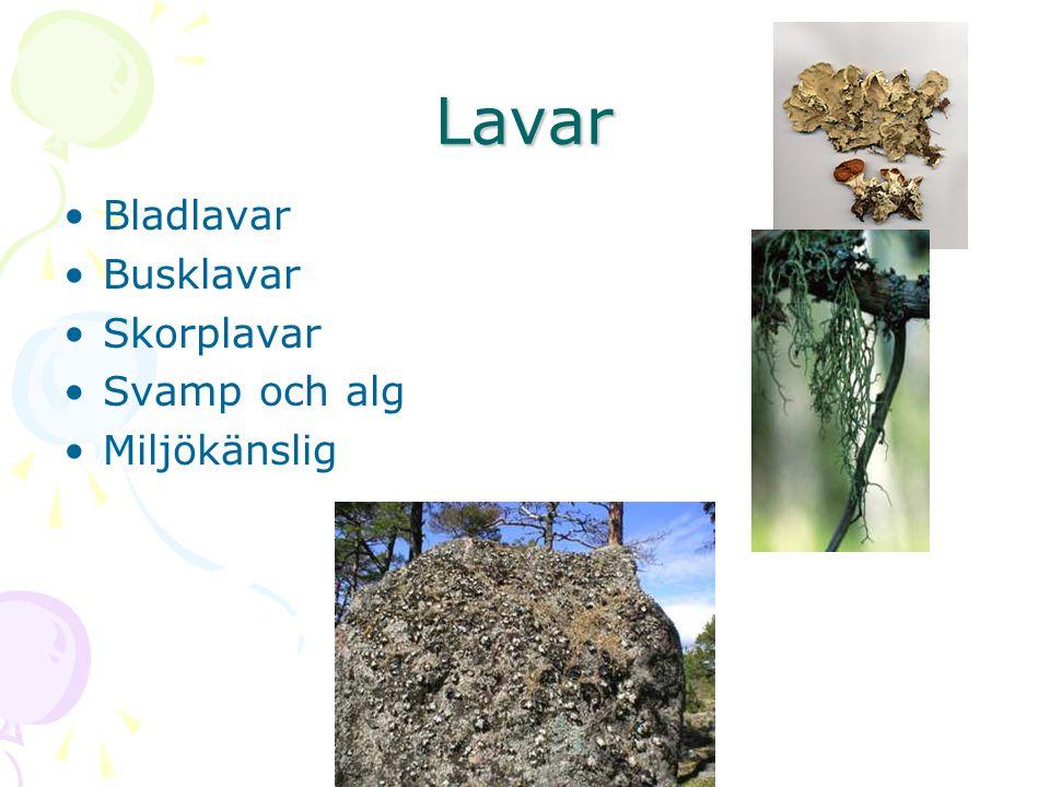 Lavar Bladlavar Busklavar Skorplavar Svamp och alg Miljökänslig