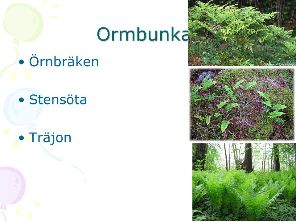 Ormbunkar Örnbräken Stensöta Träjon