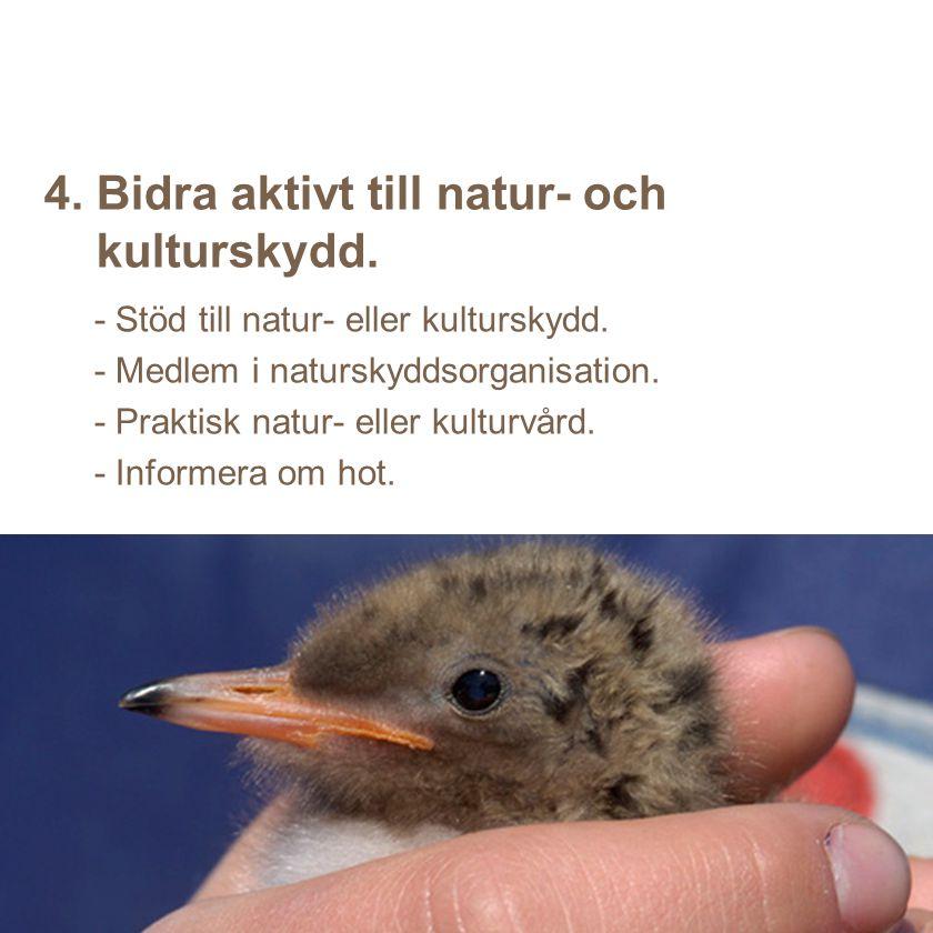 4. Bidra aktivt till natur- och kulturskydd.