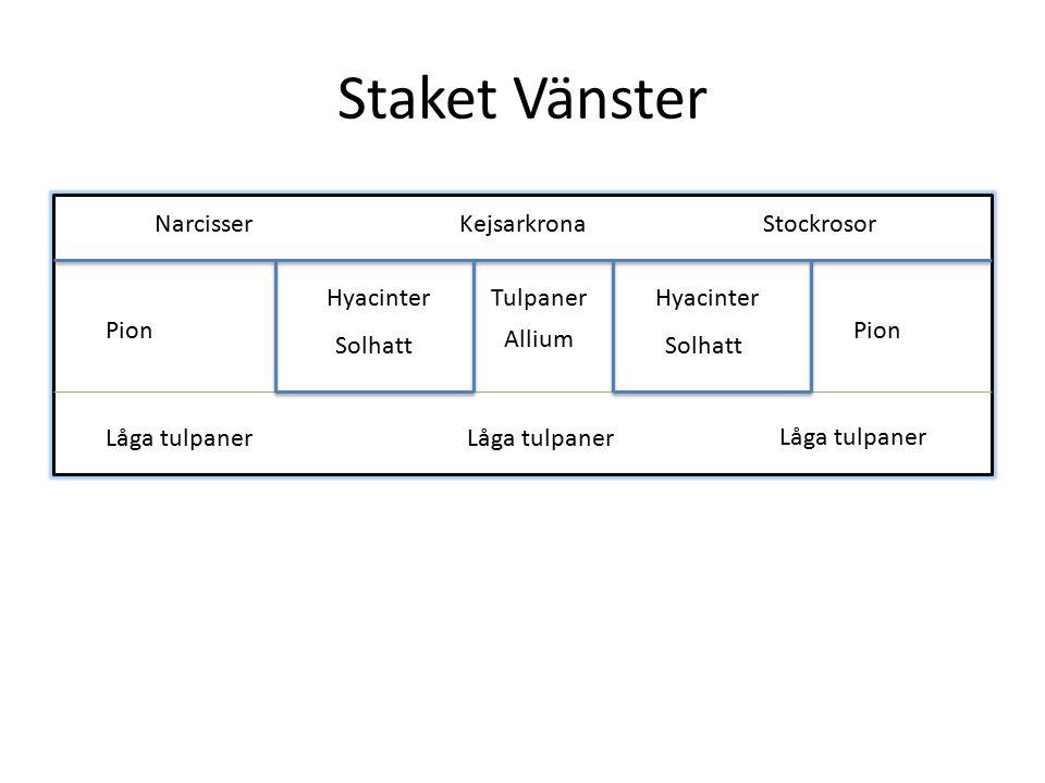 Staket Vänster Narcisser Kejsarkrona Stockrosor Hyacinter Tulpaner