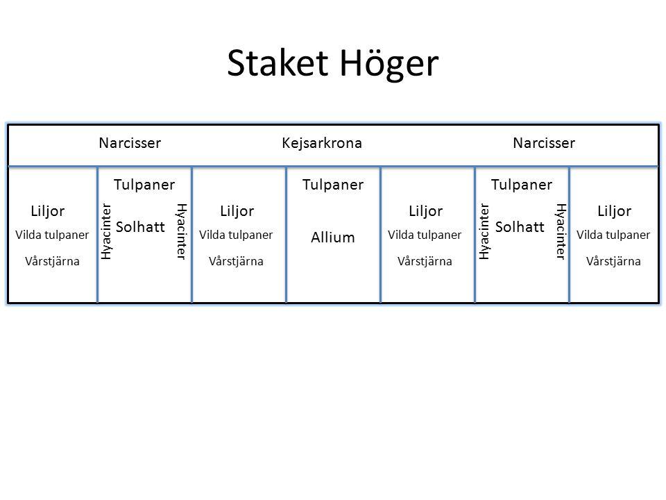 Staket Höger Narcisser Kejsarkrona Narcisser Tulpaner Tulpaner
