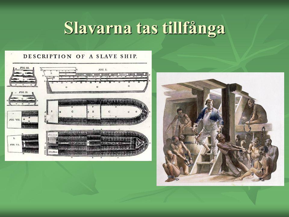 Slavarna tas tillfånga