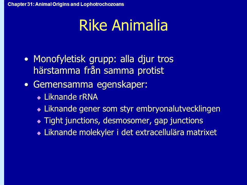 Rike Animalia Monofyletisk grupp: alla djur tros härstamma från samma protist. Gemensamma egenskaper: