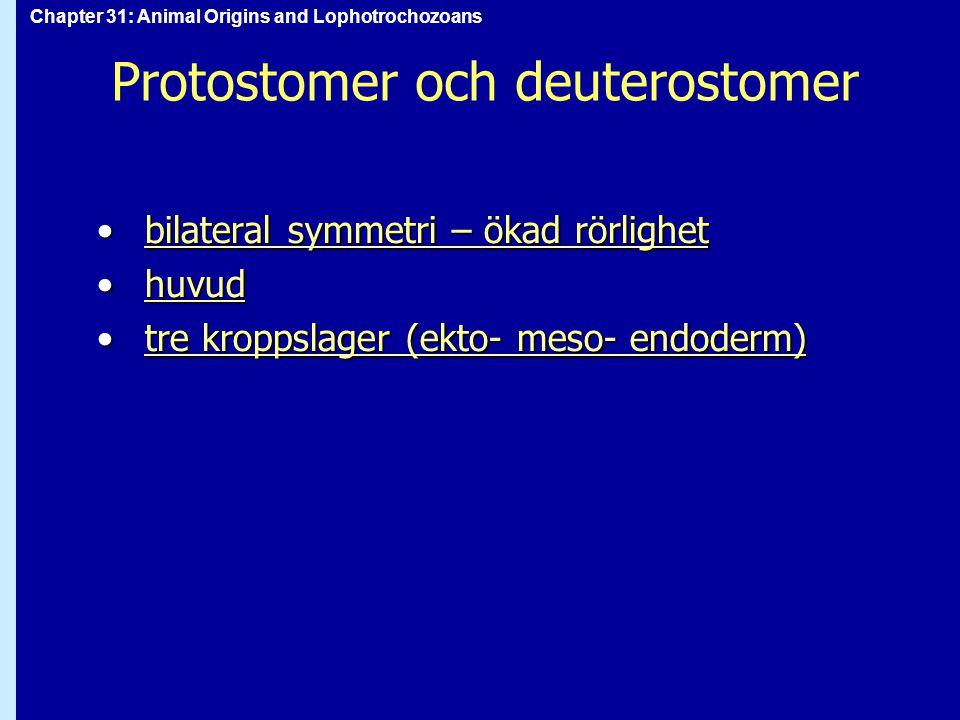 Protostomer och deuterostomer