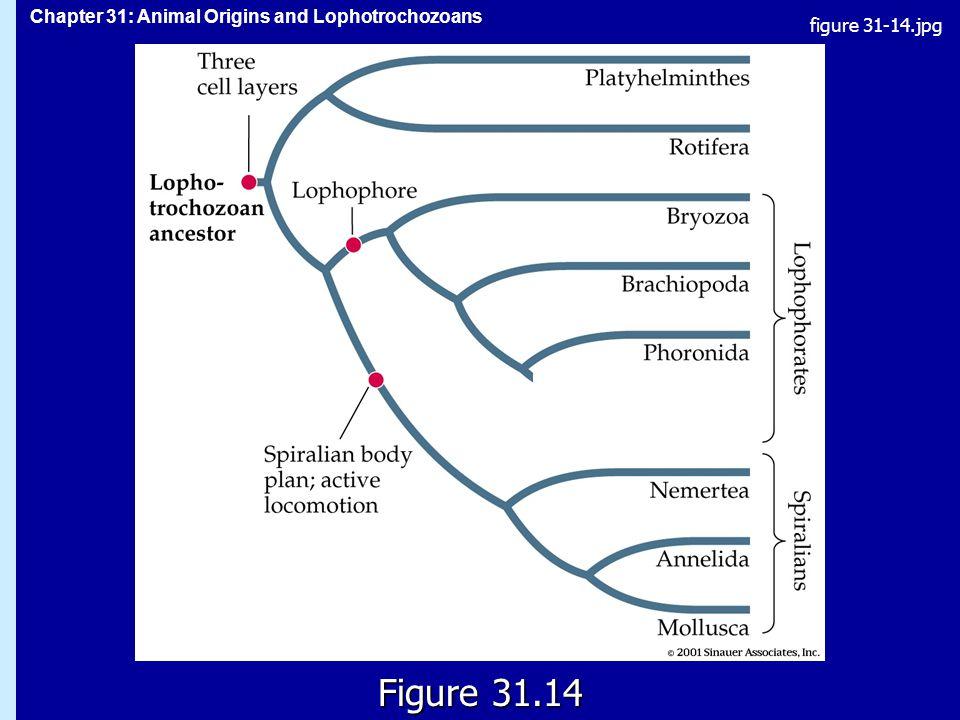 figure 31-14.jpg Figure 31.14 Figure 31.14
