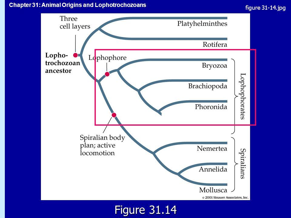 figure 31-14.jpg Figure 31.14