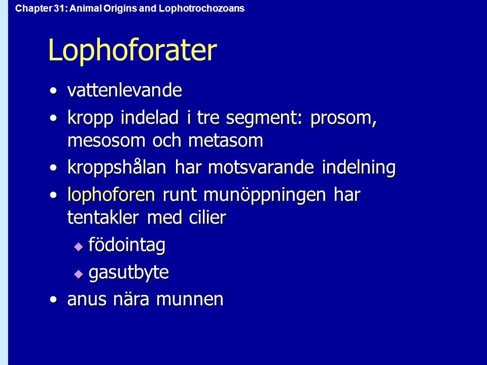 Lophoforater vattenlevande