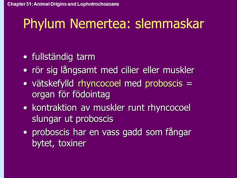 Phylum Nemertea: slemmaskar