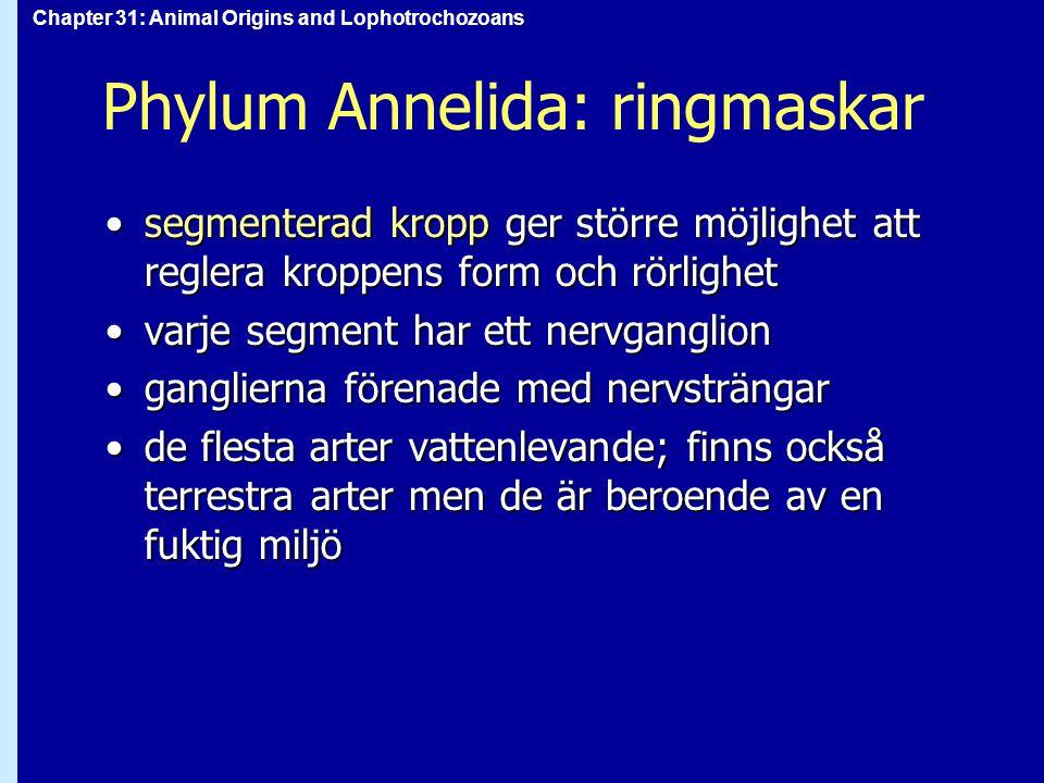 Phylum Annelida: ringmaskar