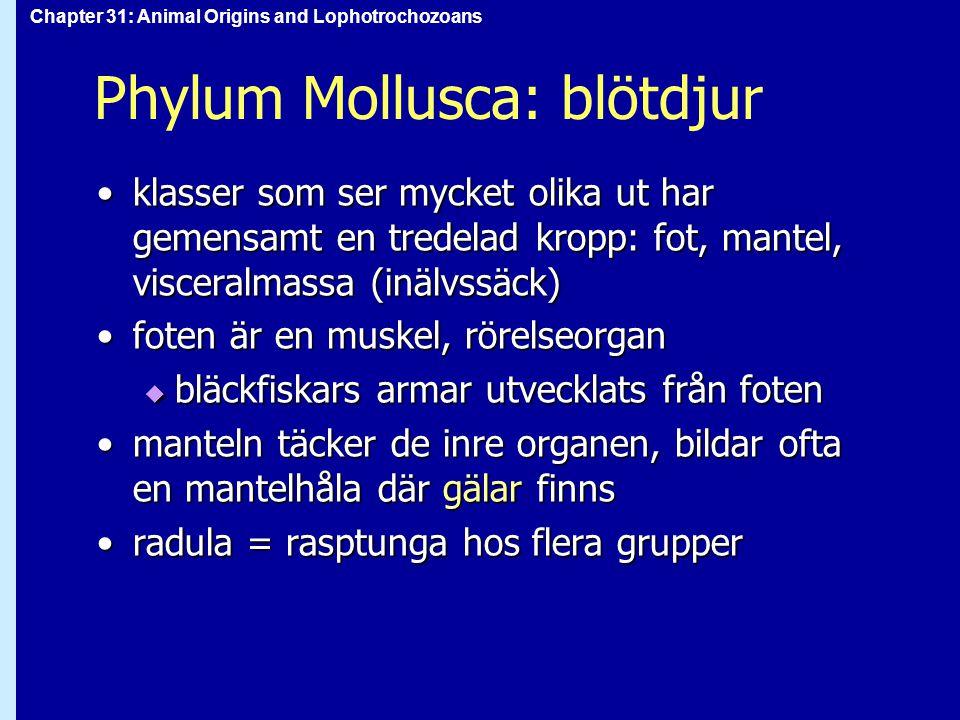 Phylum Mollusca: blötdjur