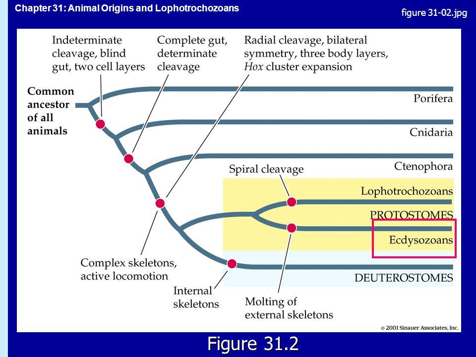 figure 31-02.jpg Figure 31.2 Figure 31.2