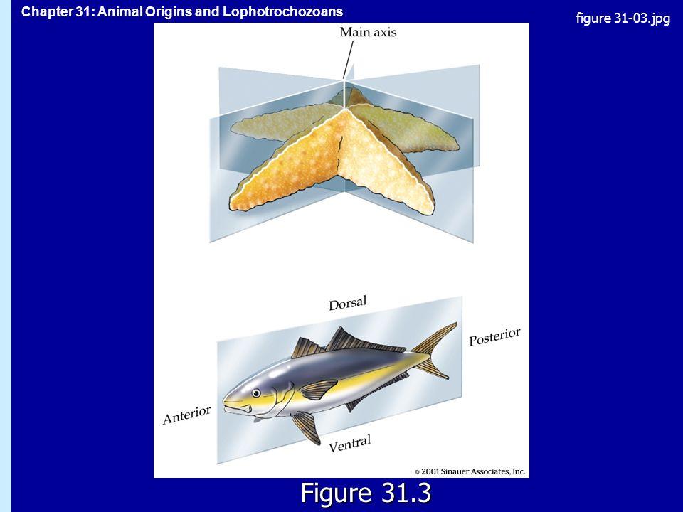figure 31-03.jpg Figure 31.3 Figure 31.3