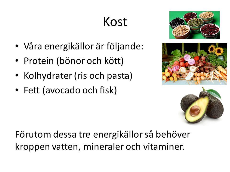 Kost Våra energikällor är följande: Protein (bönor och kött)