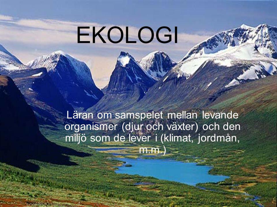 EKOLOGI Läran om samspelet mellan levande organismer (djur och växter) och den miljö som de lever i (klimat, jordmån, m.m.)