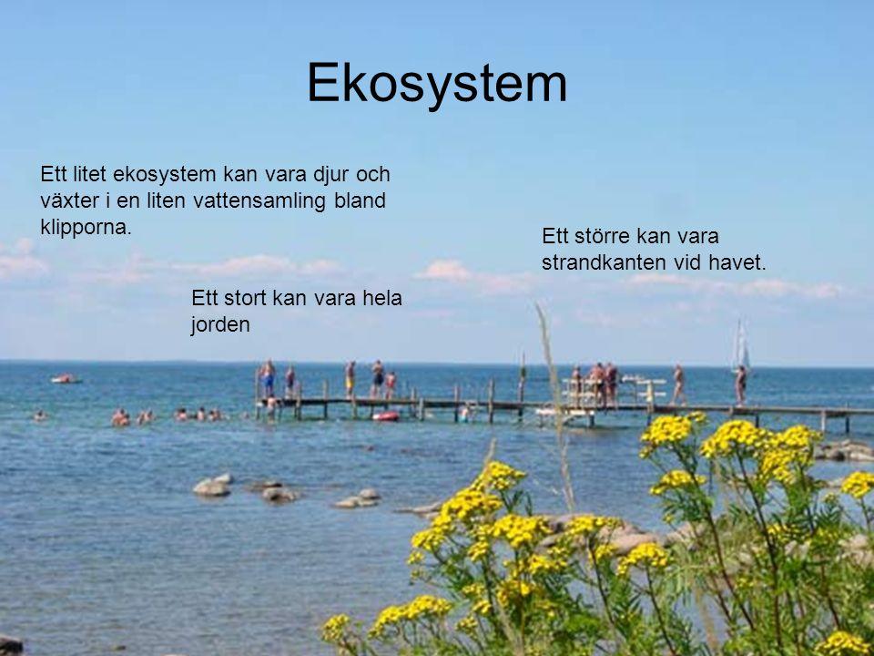 Ekosystem Ett litet ekosystem kan vara djur och växter i en liten vattensamling bland klipporna. Ett större kan vara strandkanten vid havet.