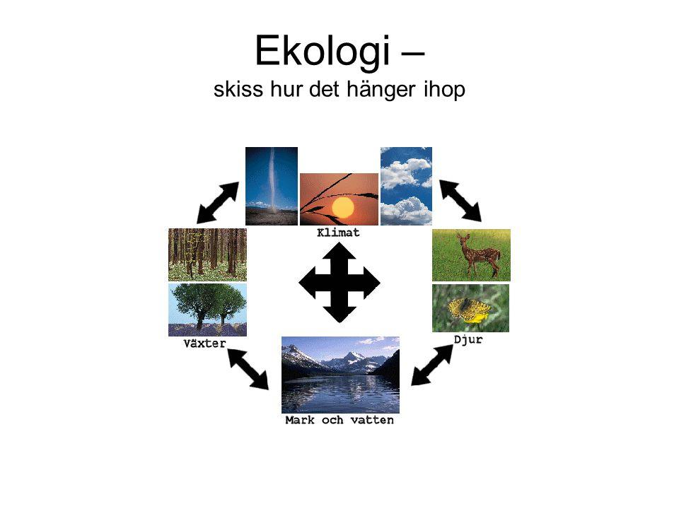 Ekologi – skiss hur det hänger ihop
