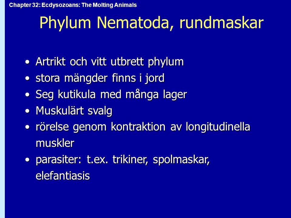 Phylum Nematoda, rundmaskar
