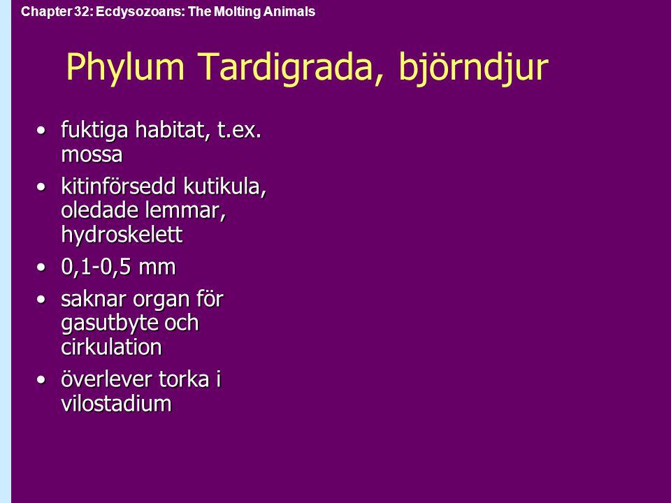 Phylum Tardigrada, björndjur