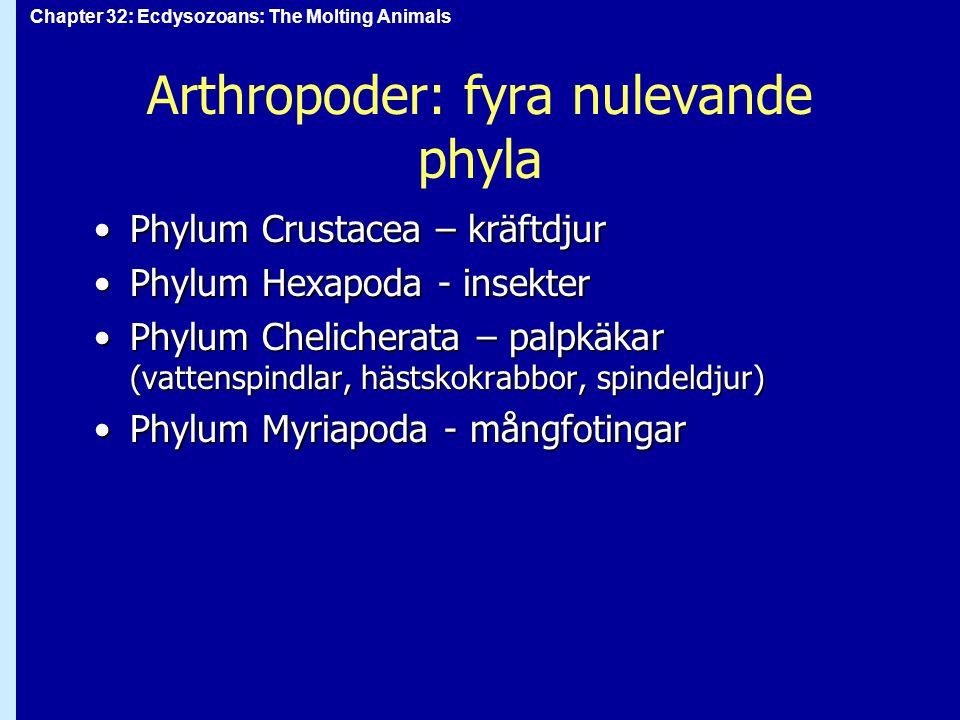Arthropoder: fyra nulevande phyla
